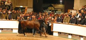 "Tattersalls Mares: The ""scrum at the acorns?"