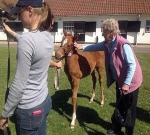 Mother of the investor greets the first-born. He made 68,000 Guineas a s a foal and 200,000 Guineas as a breezer.