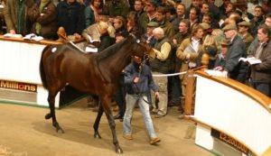 Tattersalls Craven Breeze Up Sale colt checks out the bidders.