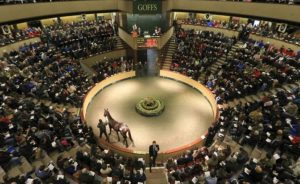 Goffs Sale Ring in Ireland - the food and drink are somewhere else.