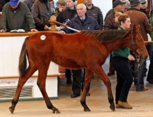 TOO many of these Foal Sales Foals being produced, they say.