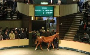 A big selling foal at Goffs making 150 times the previous lot.