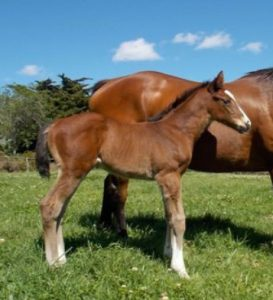 Rocket Countdown as a foal, Oldlands Stud.