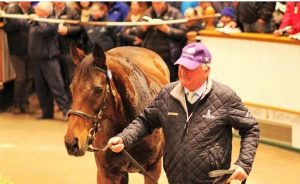 Ballymacoll Stud Manager Peter Reynolds and Islington do a lap of the ring at Tattersalls. Not a dry eye anywhere, certainly not Peter's.