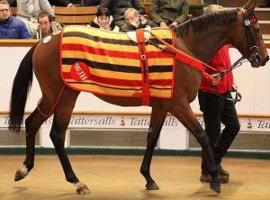 WILLIE John 1.9 million guineas at Tatts February 2018. (tattersalls.com)