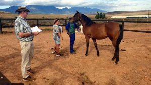 ALISTAIR Gordon and Jane Thomas doing their yearling inspections.